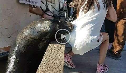 León marino agarra de la ropa a una niña y la tira al agua