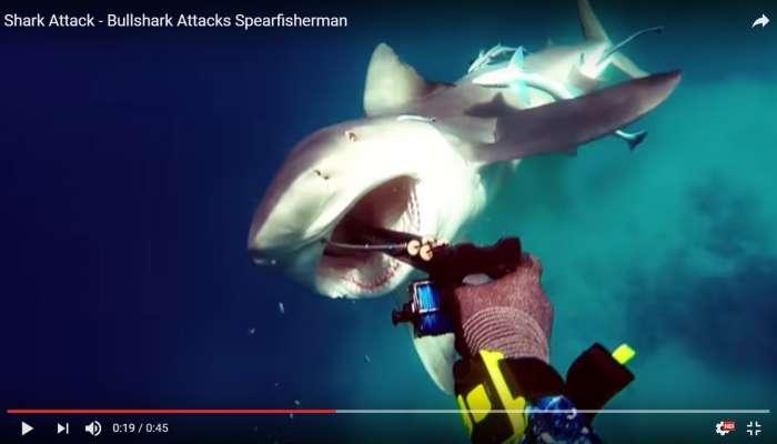 Tiburón ataca a submarinista mientras este grababa bajo el agua